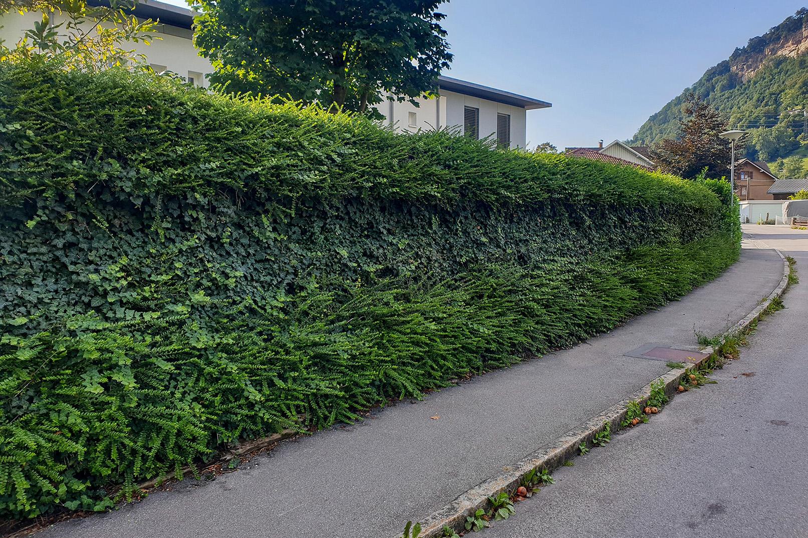 Bloomfeld_Zahrensdorf_Naturawall_Bregenz_ohneRosen